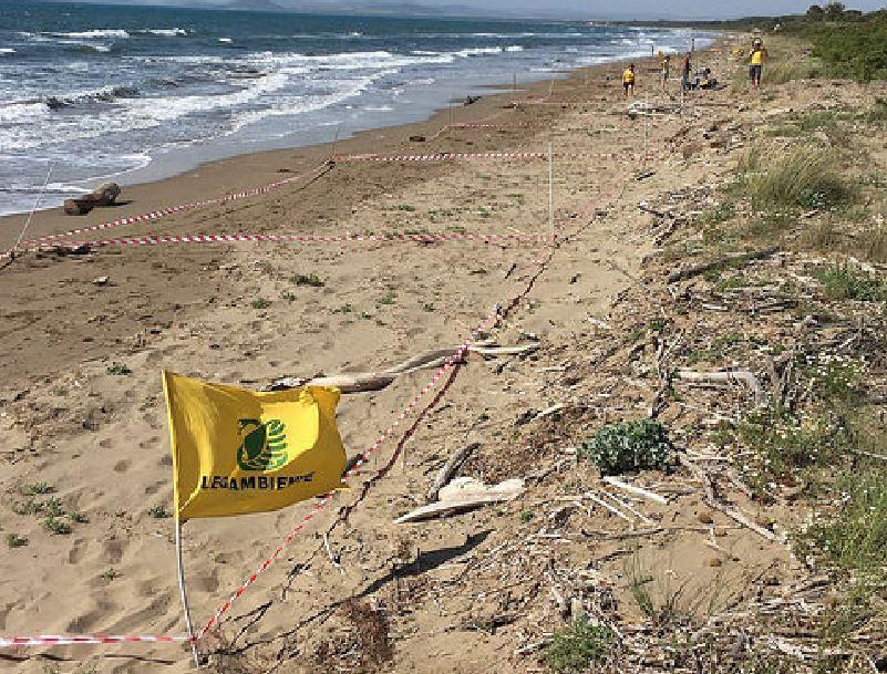 Risultati immagini per Legambiente Beach Litter 2018