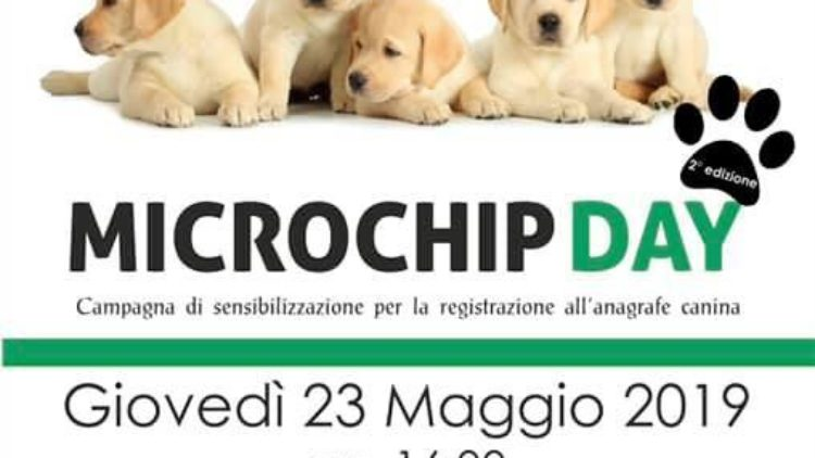 Gallery MicroChip Day – 2019
