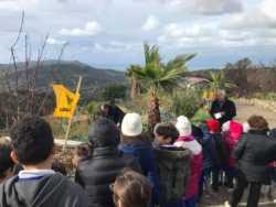 Festa dell'Albero 2017