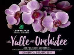 NELLA VALLE DELLE ORCHIDEE 2019 (8)